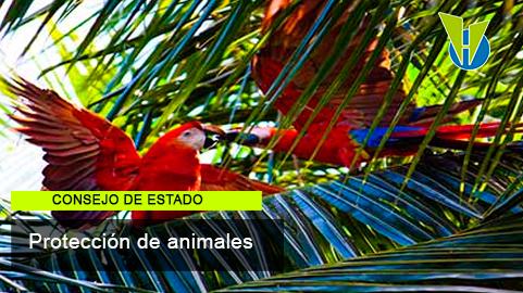 Animales silvestres no pueden permanecer en propiedades horizontales