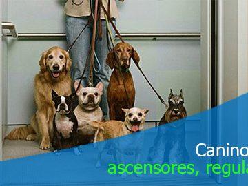Regulación del ingreso de caninos a los ascensores del edificio