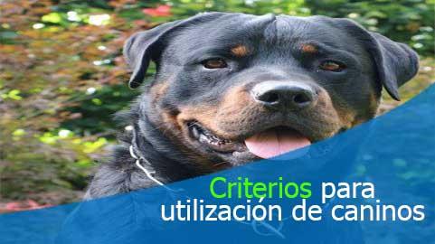 Superintendencia de vigilancia y seguridad privada establece criterios para la utilización de caninos en la prestación del servicio