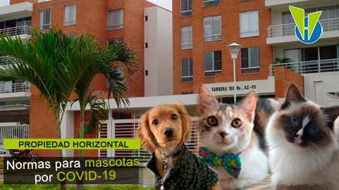 Protocolos de bioseguridad para manejo de mascotas