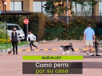 Cómo se regulará ahora la circulación de mascotas en la P.H.