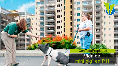 """¿Puedo tener un cerdo """"mini pig"""" en mi apartamento?"""